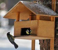 Как да направите захранващо устройство за птици със собствените си ръце - дървени, от бутилки